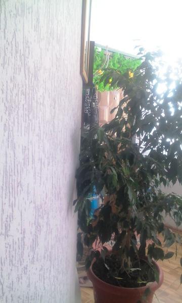 Продам 2-комн. квартиру по адресу Россия, Краснодарский край, Геленджик, Озерная ул., 40 фото 10 по выгодной цене